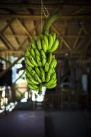 bananeira foto