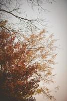 carvalho outono ou final da queda