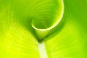 fechar a textura de fundo de folha de bananeira foto