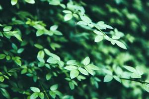 lindo arbusto verde com folhas frescas foto