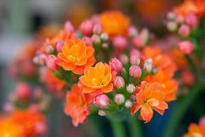 flores de lantana foto