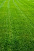 textura de grama verde foto
