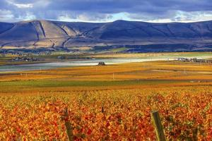 laranja folhas uvas queda vinhedos vermelho montanha benton cidade washington