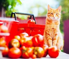 gato com tomates frescos foto
