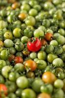 muitos tomates cereja vermelhos foto