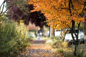 calçada de bairro outono