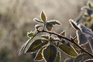 folhas geladas foto