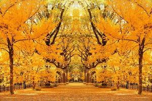 outono do central park foto