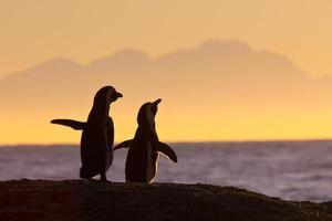 par de pinguins em pé juntos ao pôr do sol foto