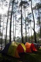 acampamento na floresta foto