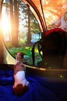 cão dentro da barraca de acampamento foto