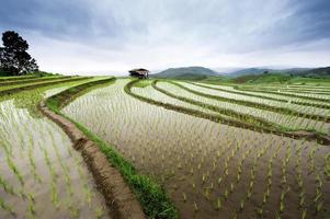 campo de arroz em terraços verdes foto