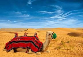 camelo de turista em dunas de areia foto