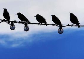 pássaros urbanos, juntos foto