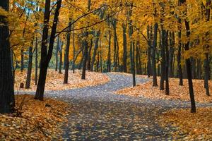 o outono no jardim neskuchny. foto