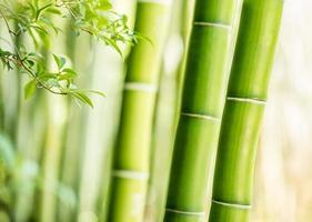fundo de bambu foto