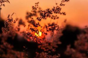 Prado e pôr do sol