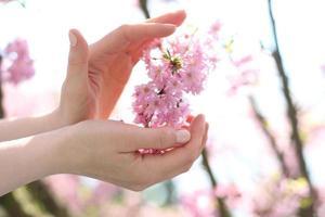 a beleza natural da mão feminina foto