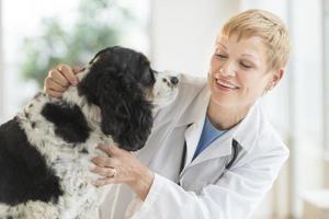 cão examinando veterinário feminino no hospital foto