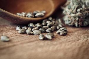 sementes e dinheiro de maconha