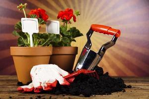 regador e luvas de jardinagem foto