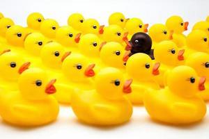 patos amarelos foto