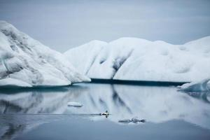 pato em icebergs cobertos de neve - lago glacial jokulsarlon, islândia