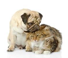 filhote de cachorro beija um gato foto