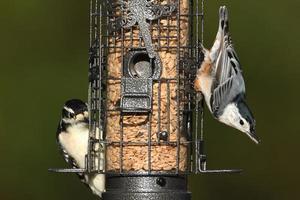 par de pássaros em um alimentador foto