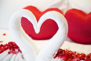 cisne casal lindo hotel romântico foto