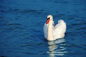 pássaros no mar foto