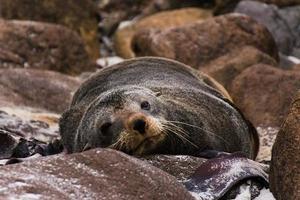 animais típicos da nova zelândia foto