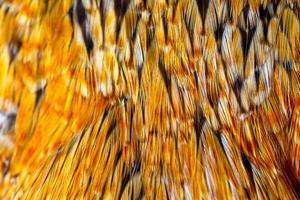 fundo de penas de galinha foto