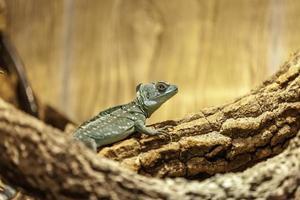 lagarto verde em pé na sombra de uma árvore foto
