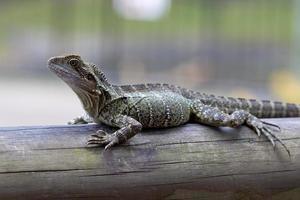 dragão de água oriental na floresta foto