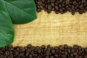 grãos de café torrados em tela foto
