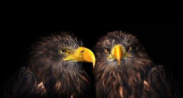 águias do mar foto