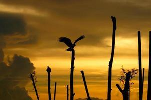 silhuetas de falcão sobre palafitas no lago. foto