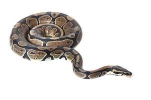 python real foto