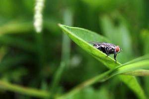fundo verde de mosca vermelha foto