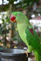 papagaio verde foto