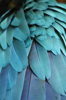 penas de papagaio foto