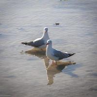 ilhas whitsunday gaivota foto