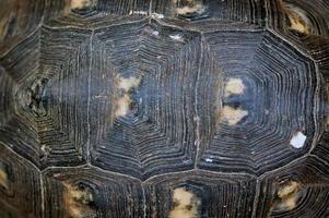 textura de concha de tartaruga foto
