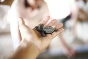 tortuga de mar foto