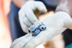resgate de tartaruga