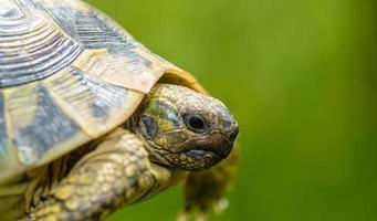 tartaruga de perto foto