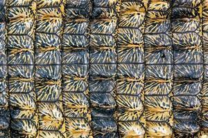 fundo de pele de crocodilo foto