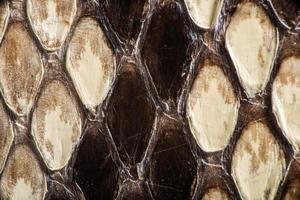 textura de pele de cobra genuína foto