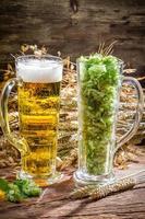 espigas de trigo em ouro cercado por lúpulo de cerveja fresca foto
